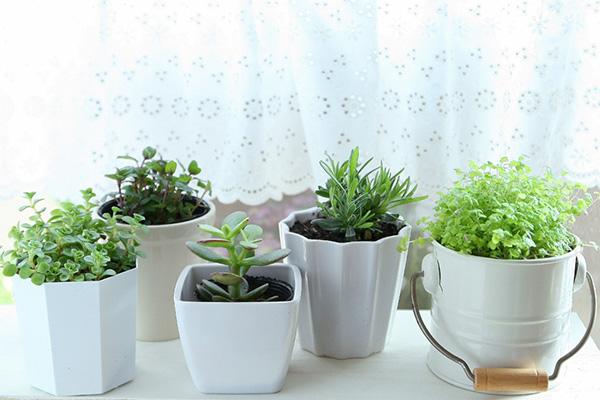 foliageplant